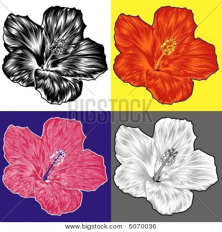 Variaciones de flor de flor de hibisco