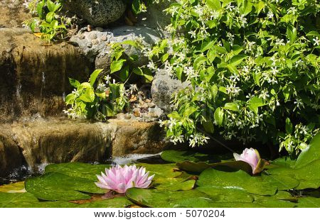 Waterfall With Lily