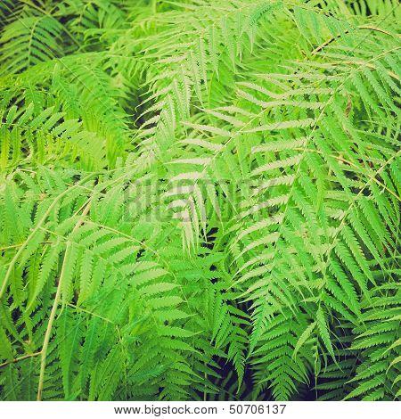 Retro Look Ferns Picture