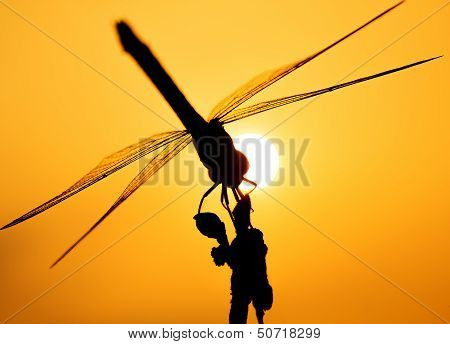 dragonfly on silhouette