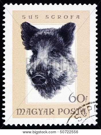 Postage Stamp Hungary 1966 Head Of Wild Boar