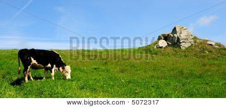 Cow & Tor