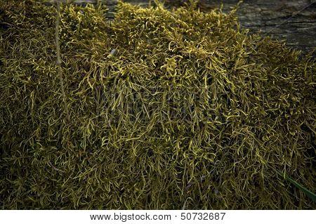 Moss Closeup Background
