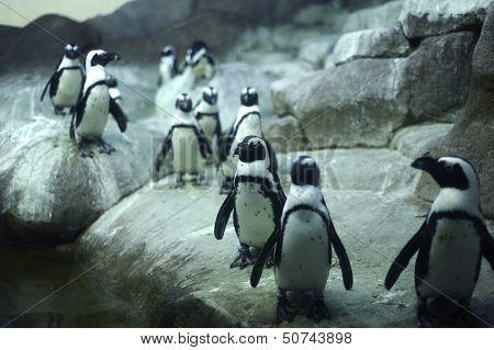 Arctic Pinguins