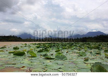Lake in Singkawang West Borneo