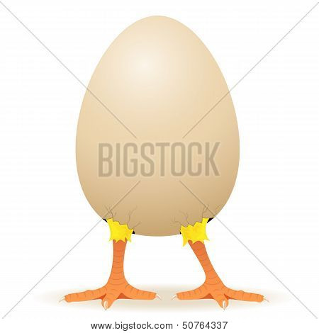 Chicken in egg