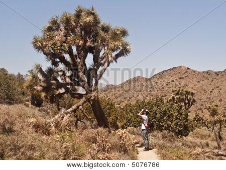 Joshua Tree Photographer