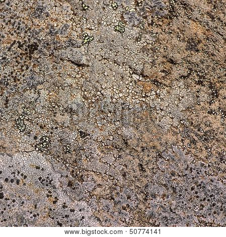 Organic Stone Texture
