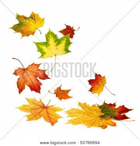 Beautiful Autumn Leaves Falling Down