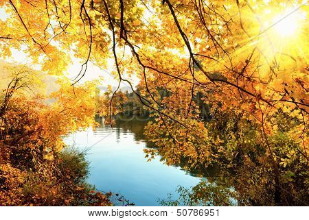The Golden Sun Of Autumn