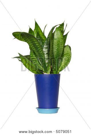 Flower In A Dark Blue Pot
