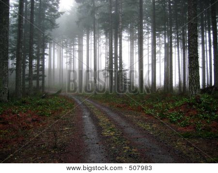 Schotterpiste in den Nebel