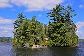 picture of moosehead  - Tree studded island in Moosehead Lake - JPG