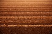 picture of plowed field  - Ploughed red clay soil agriculture fields ready to sow