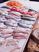 stock photo of fresh water fish  - Fresh Fishes on the Market of the old medina in Essaouira Morocco Africa - JPG
