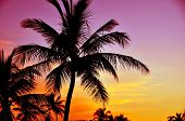 foto of pinky  - Tropical Sunset - JPG