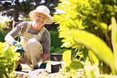 stock photo of cultivation  - Happy elder woman with gardening tool working in her backyard garden - JPG