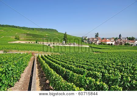 Oger,Champagne region,France