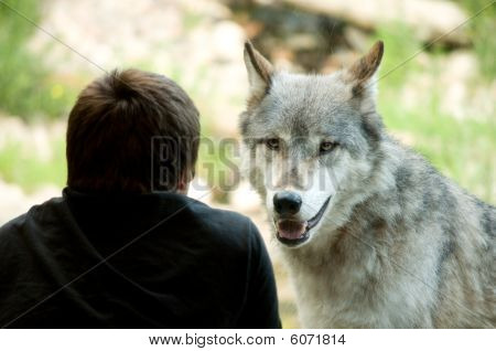 Watching The Wolves