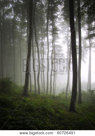 Vertical photo of beautiful enchanted forest with fog