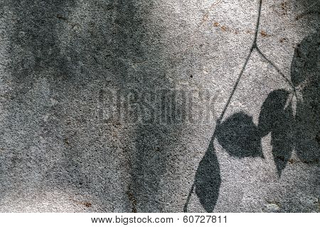 Blurred Shadow Of Some Leafs On A Grey Wall