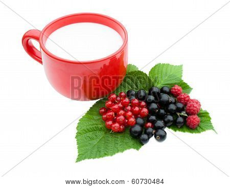 Berries, Currant  And Cup Of Milk
