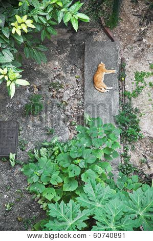 Topview Of A Cat Sleeping In Backyard