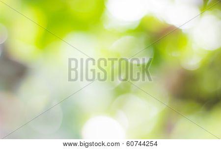 Natural Bokehblurred bokeh