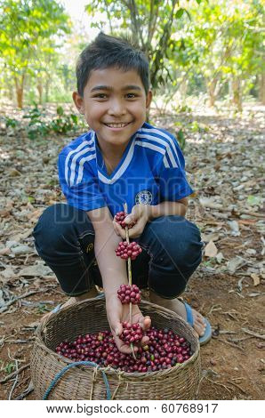 little boy with coffee berries in his hands