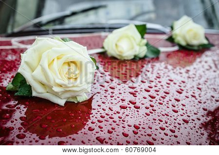 Three White Roses On Claret Car.