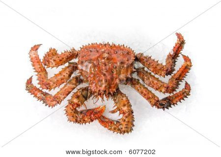 The King Crab