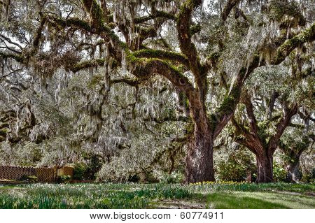Carolina Spring