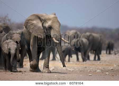 Elefanten-Fuß