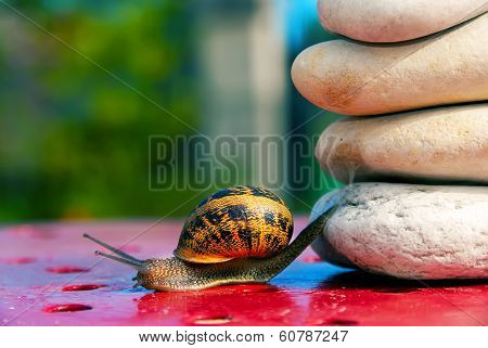 Snail From Crossing An Obstacle