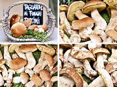 stock photo of porcini  - Set of images of Closeup bunch of Porcini mushrooms at the market in Italy - JPG