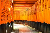 stock photo of inari  - Fushimi Inari Taisha shinto shrine or temple. Fushimi ku Kyoto Japan. Asia.