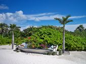 picture of moon-flower  - An old boat between two palm trees serves as a trail - JPG