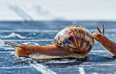 picture of encouraging  - snail finish encouraged by its congener crosses the finish line