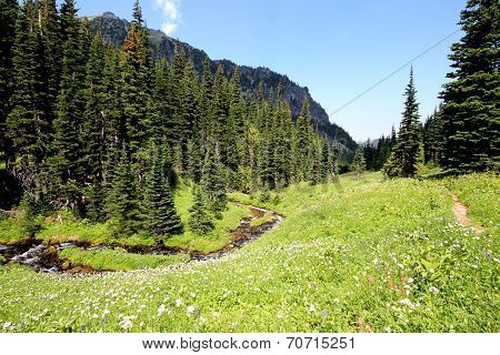 Alpine Meadow with Stream