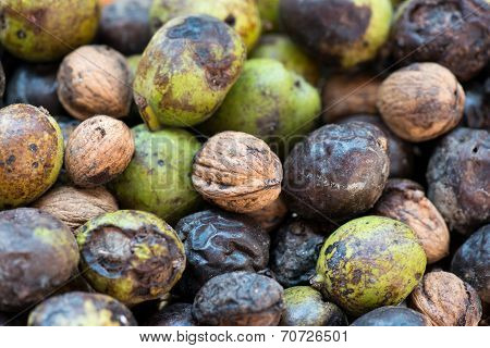 Background Of Wild Walnuts