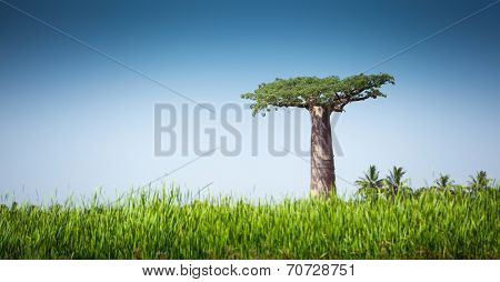 Baobab tree and lush green grass at sunny day
