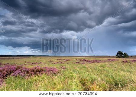 Stormy Sky And Rainbow Over Heatherland