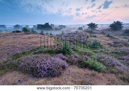 Misty Morning On Heatherland
