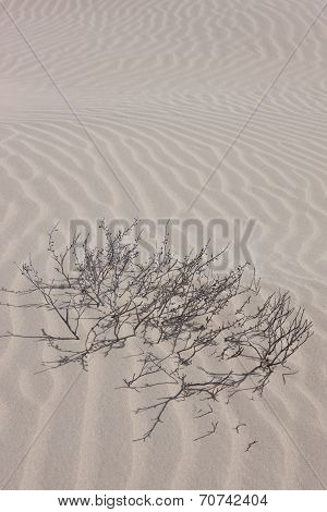 Bare shrub in the sandy desert