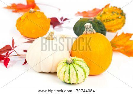 Mini Pumpkins Over White