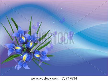 illustration with iris flowers on blue background