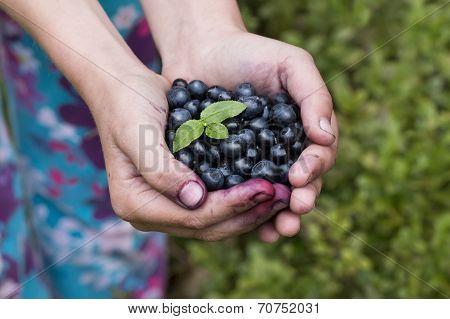 full hand of blueberries