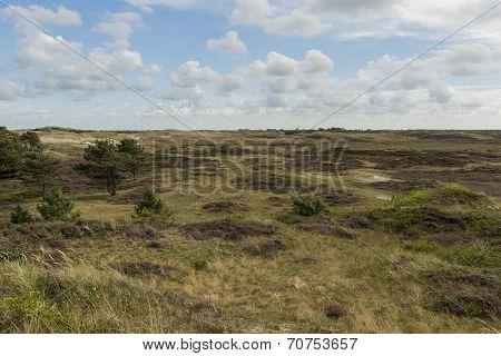 Dunes Of Texel