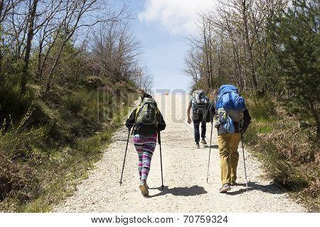 Pilgrim On The Road To Santiago De Compostela