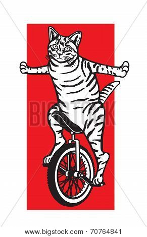 Cat riding a unicycle